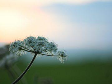 Die Kraft der Pflanzen